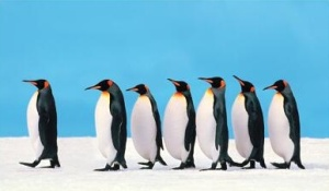 leadership-penguins1